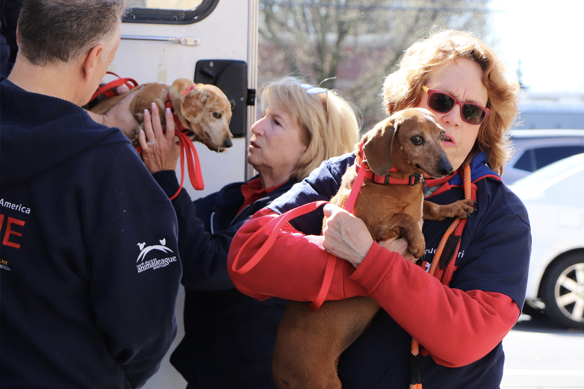 Mill dog survivors arrive to a warm NSALA welcome, March 14, 2020.