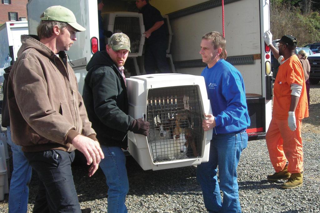 Combatting the Inhumanity of Puppy Mills