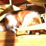 alfredo-napping