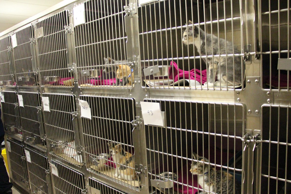 Peggy Adams Animal Rescue West Palm Beach Florida