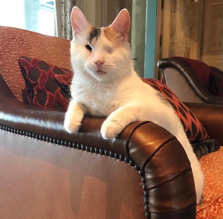 bella-blind-cat