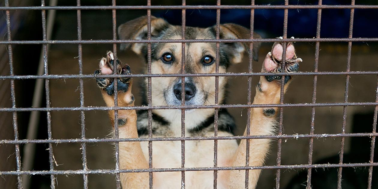 Puppy Mill & Purebred Dog Rescue Rescue