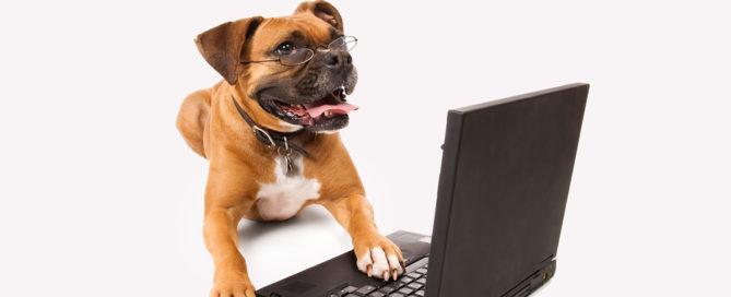 Pet Legal Q&A Archives | Animal League