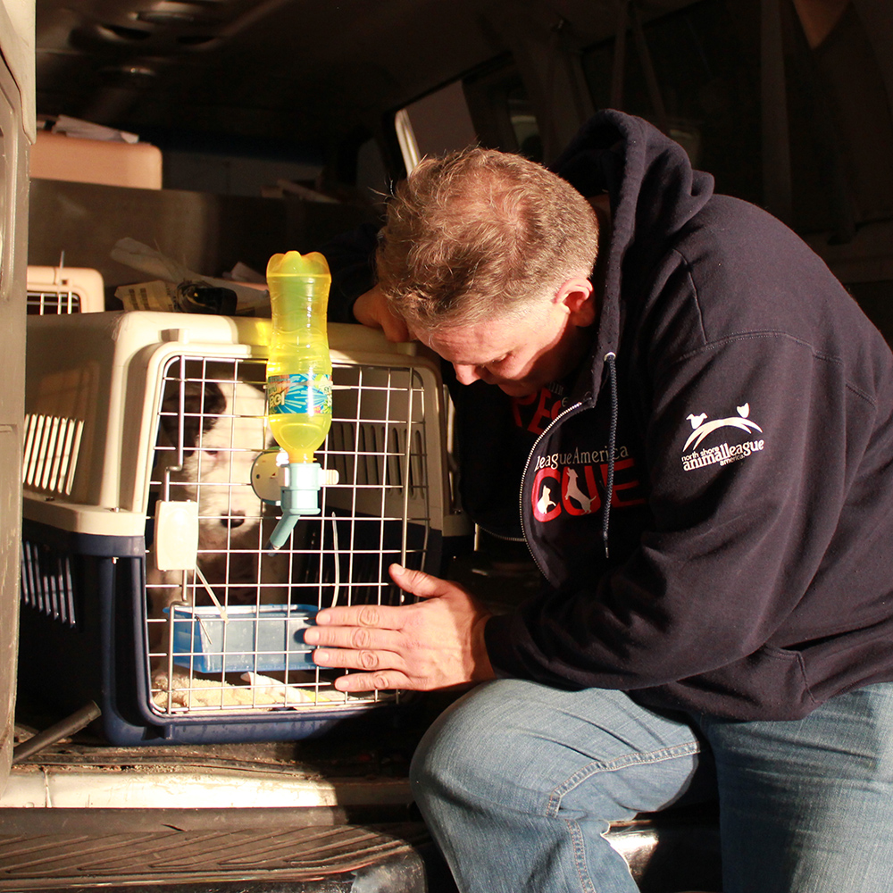 Thailand rescue dog arrives safely at North Shore Animal League America.