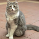Pretty-Kitty-8-25-15-3Q2015