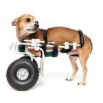 pablo-wheelchair
