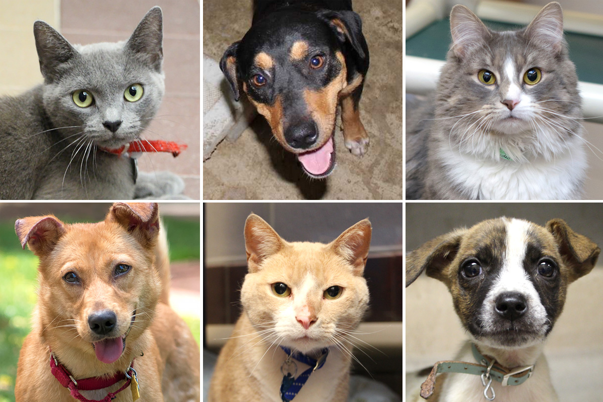 Browse Our Adoptable Pets