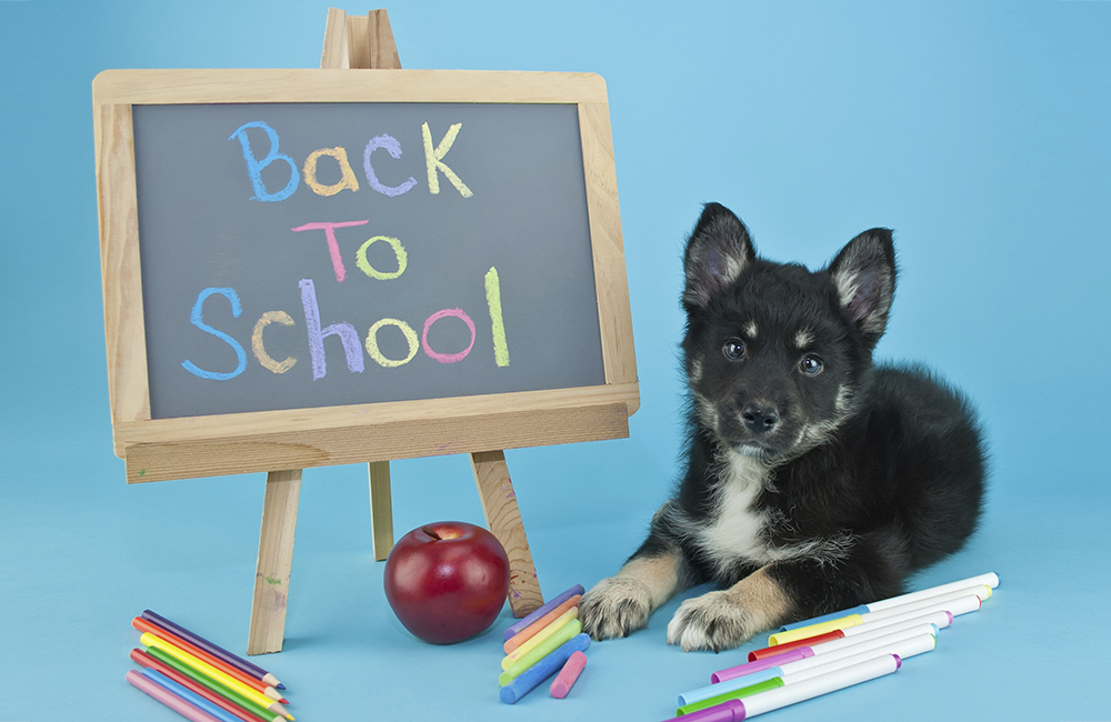 Leaving your dog at home dog puppy training blog for Back to home pics