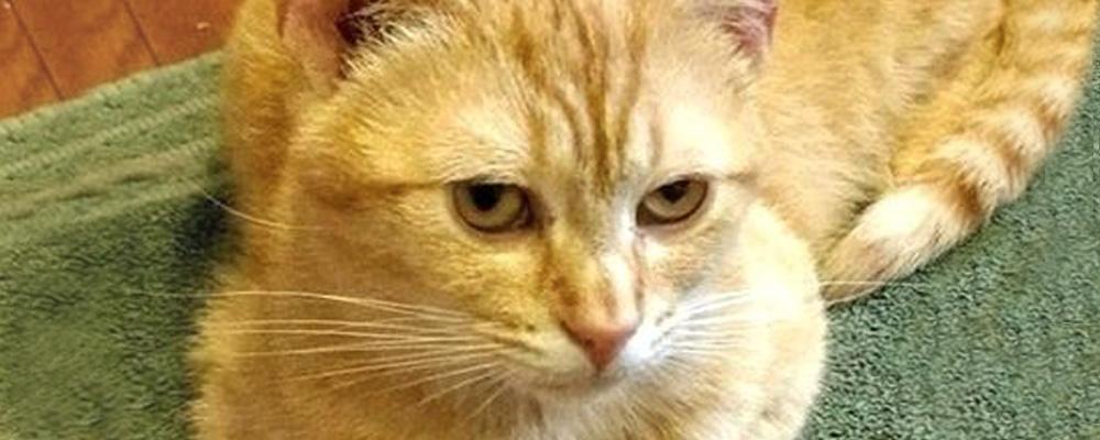 Animal Welfare League Cats For Adoption