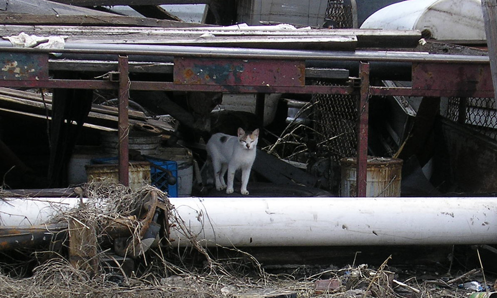 Cat in debris after hurricane