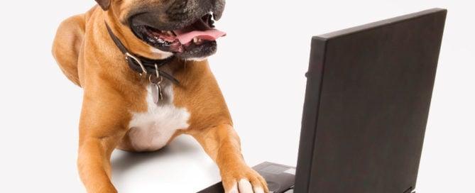 Pet Legal Advice
