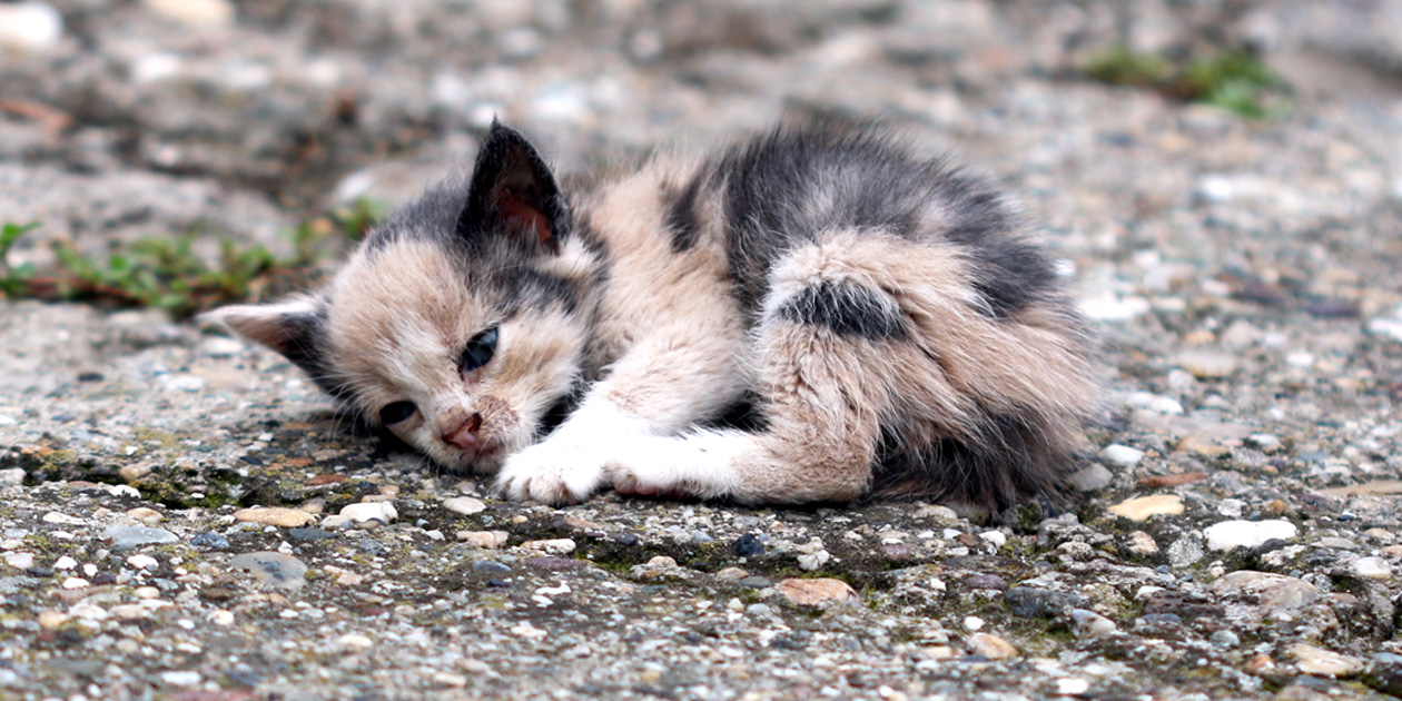kitten eye infections treatment