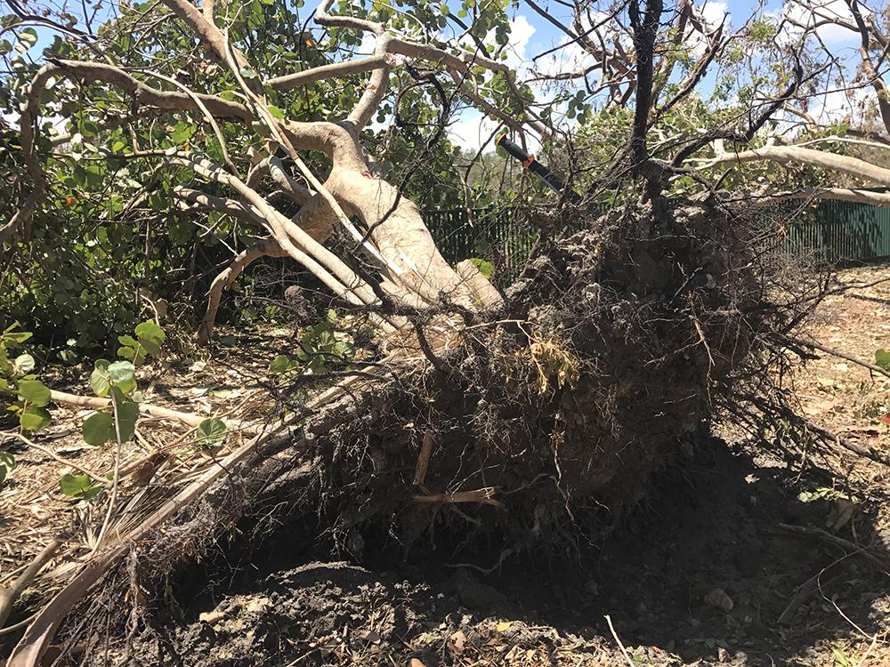 hurricane irma emergency response animal league