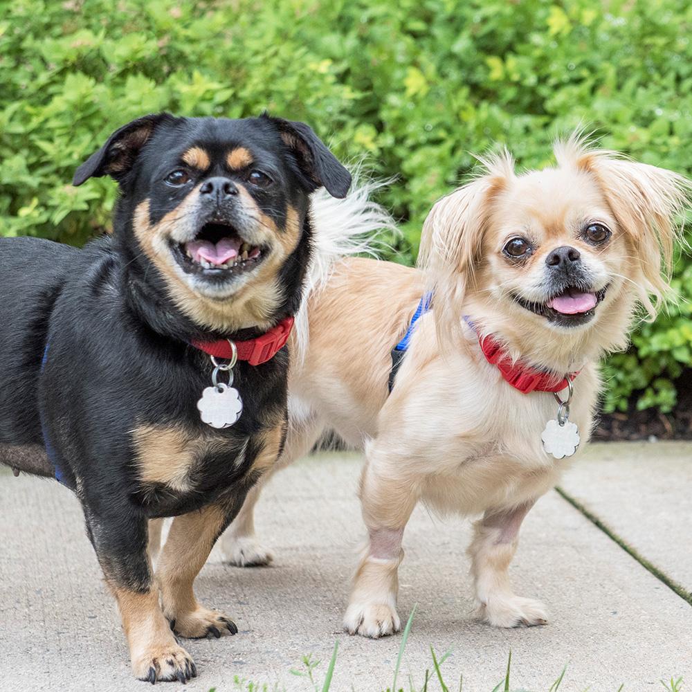 Meet Rosie & Lily