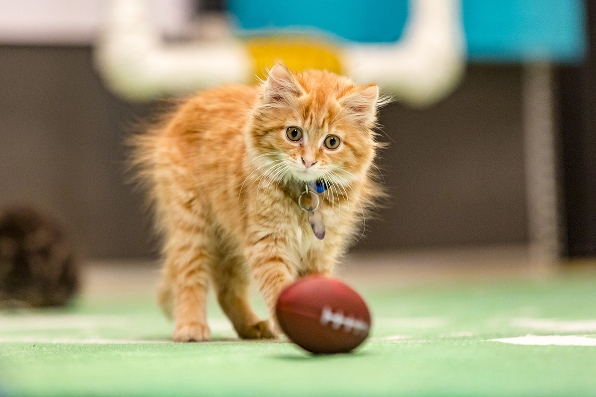Adopt A Kitten Bowl V All Star Events