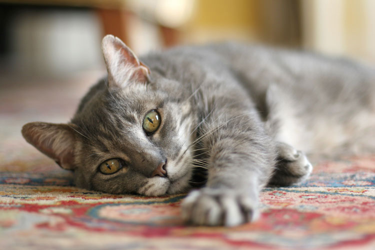 How To Keep Your Kitty Safe And Warm All Winter Blog Animal League
