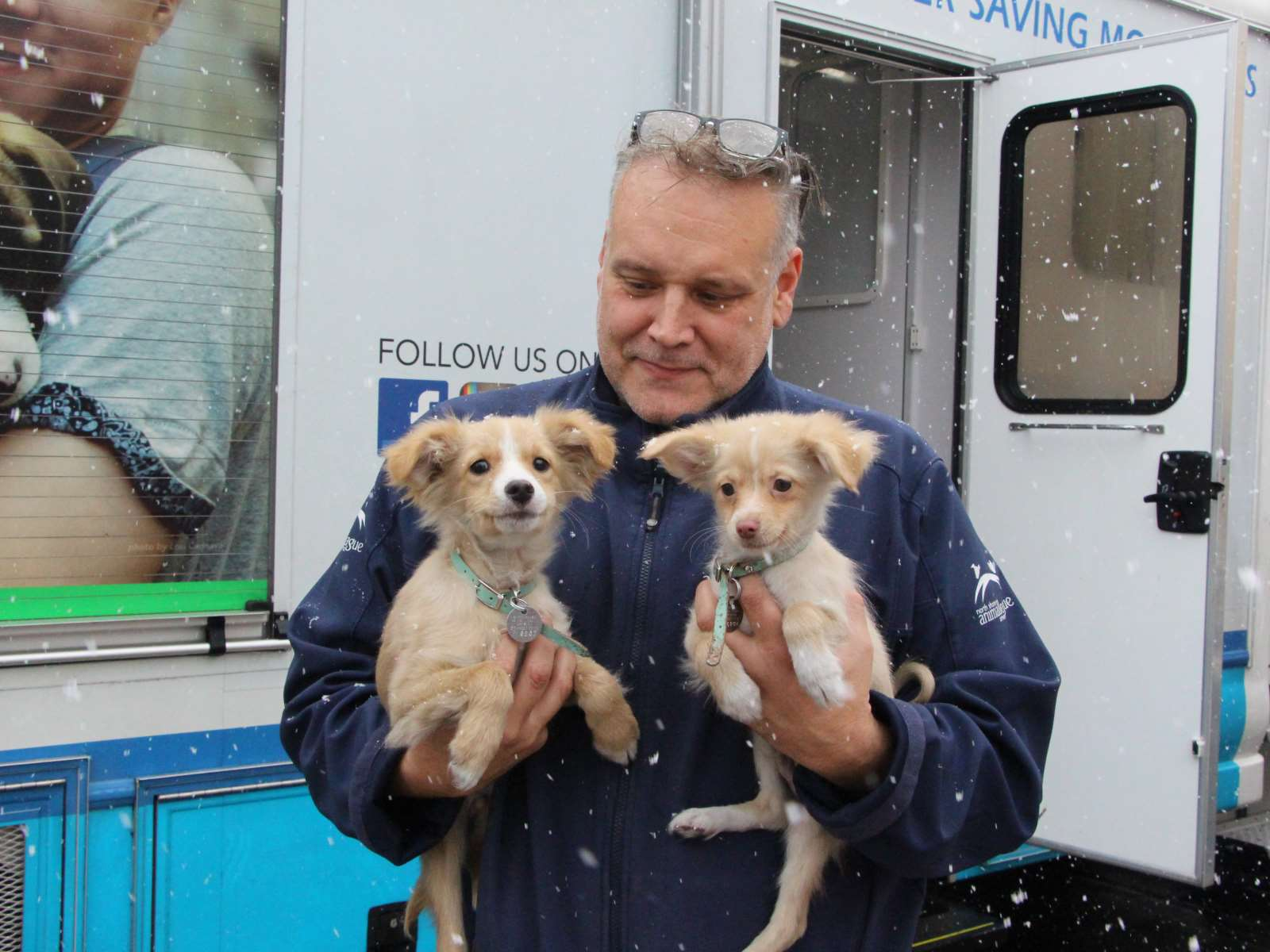 47 Dogs and Puppies Rescued from Midwest | Rescue | Animal