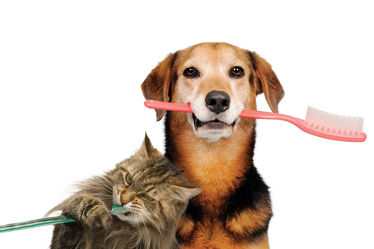 Oral Care For Dogs And Cats