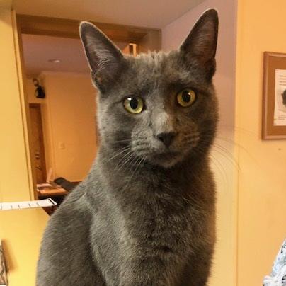 Meet Orville