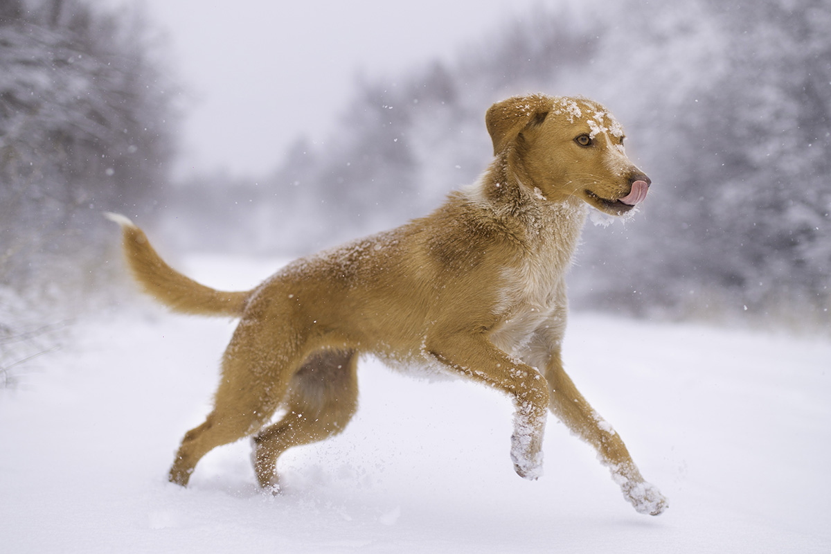 Keep Your Pets Safe And Warm This Winter Blog Animal League