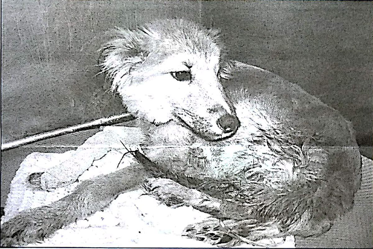 Bambi in 2005 Animal League America Newsletter