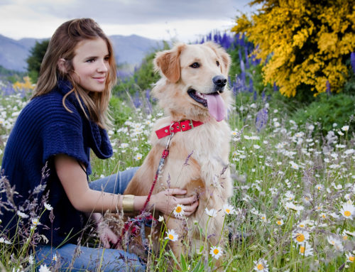 May is Pet Allergy Awareness Month