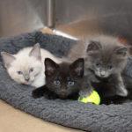 nursery-gallery-bf2168-amelia-kittens-img2812-040618