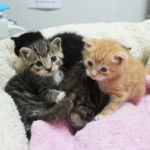 nursery-gallery-foster-kitten-feeding-img1477-041818