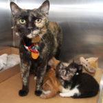 nursery-gallery-h209214-stella-kittens-img2832-043018