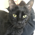sponsor-pet-pom-pom-d48272-black-male-cat-img5195-052218