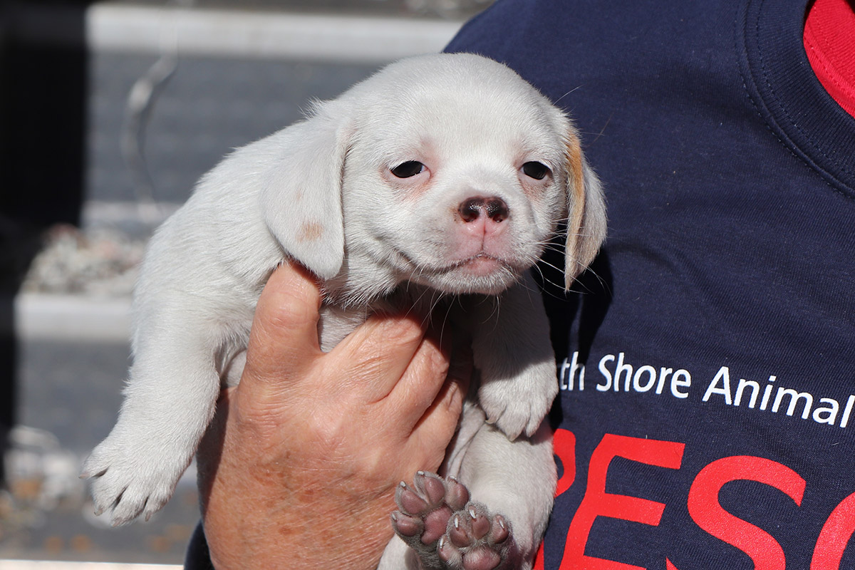 Collaborative Effort Saves 57 Dogs And Pups Puppy Mill Rescue