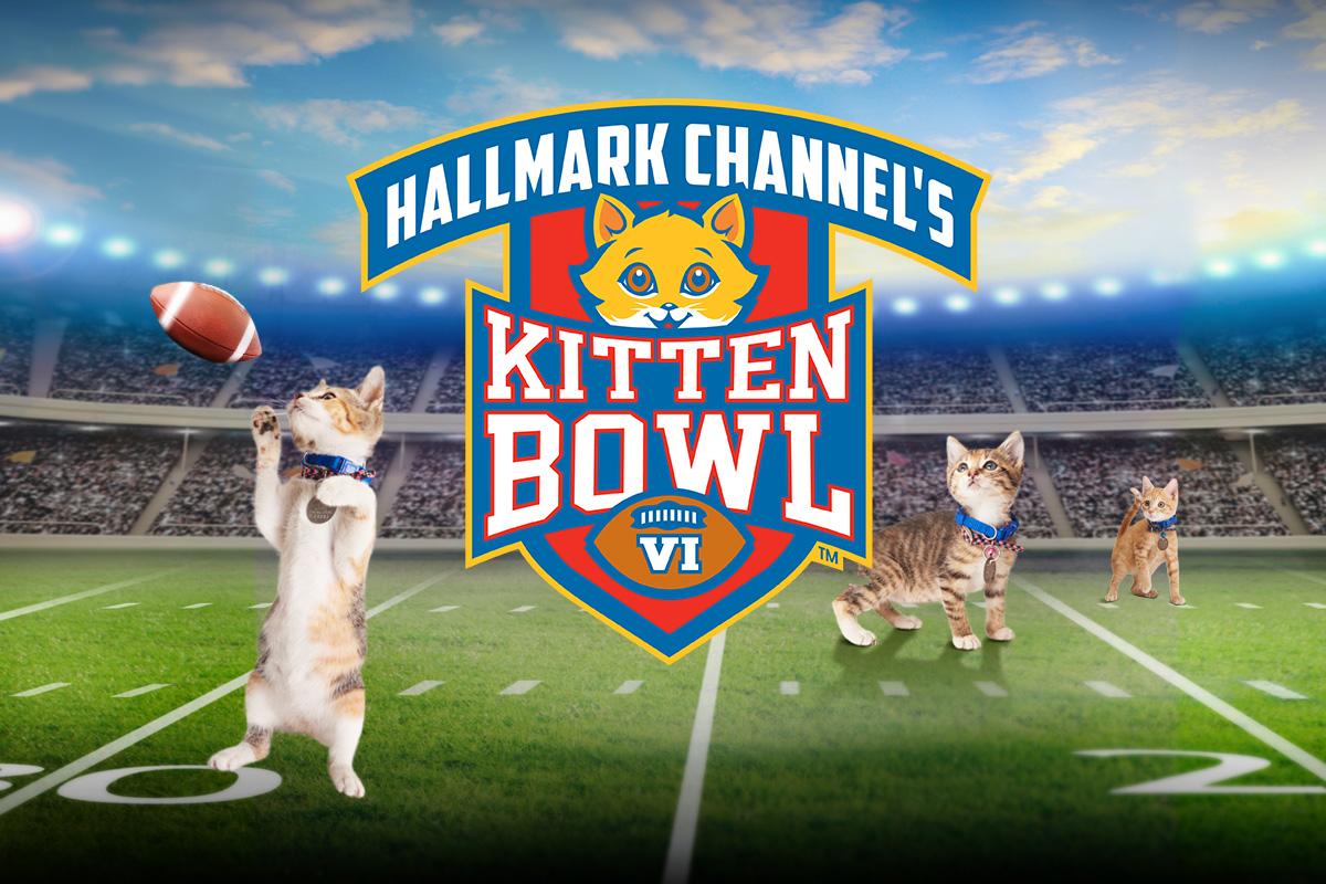 Hallmark Channel S Kitten Bowl Vi Events Animal League America