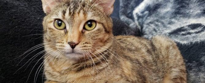 Emergency Pet Rescue Archives | Animal League