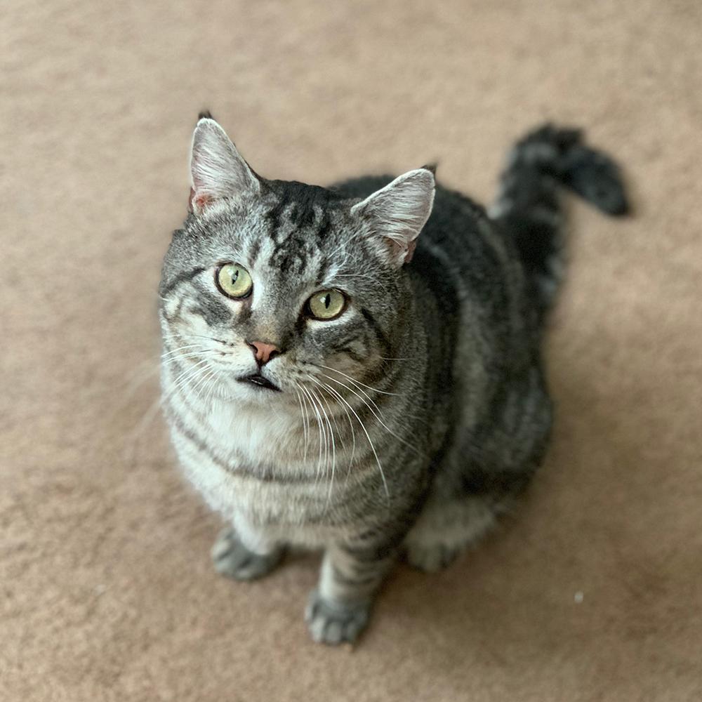 Meet Floyd