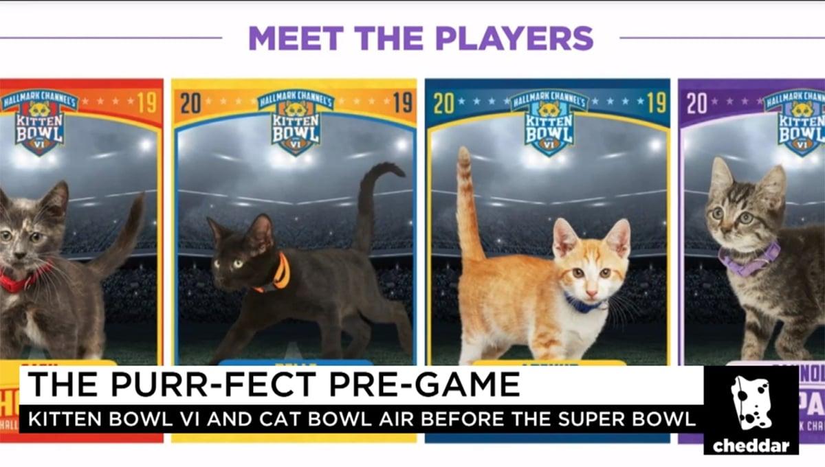The Purrr-fect Super Bowl Alternative: Kittens!