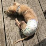 Sponsor Pet Coco (Chachi)