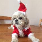 Sponsor Pet Karina (Daisy)