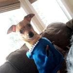 Sponsor Pet GI Joey