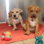 Sponsor Pet Nursery