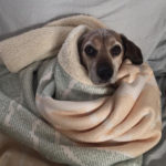 Sponsor Pet Julia