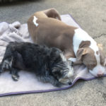 Sponsor Pet Louie