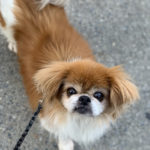 Sponsor Pet Alfredo