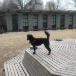 Sponsor Pet Priscilla