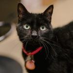 Sponsor Pet: Apollonia