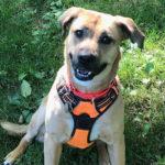 Sponsor Pet: Dakota