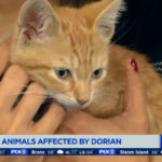 Adoption fees waived for cats, kittens at North Shore Animal League America