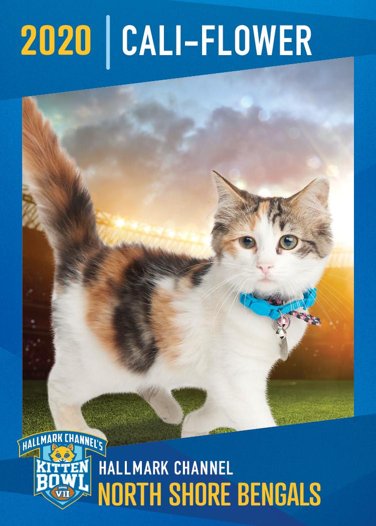 Hallmark Channel S Kitten Bowl Vii Events Animal League America