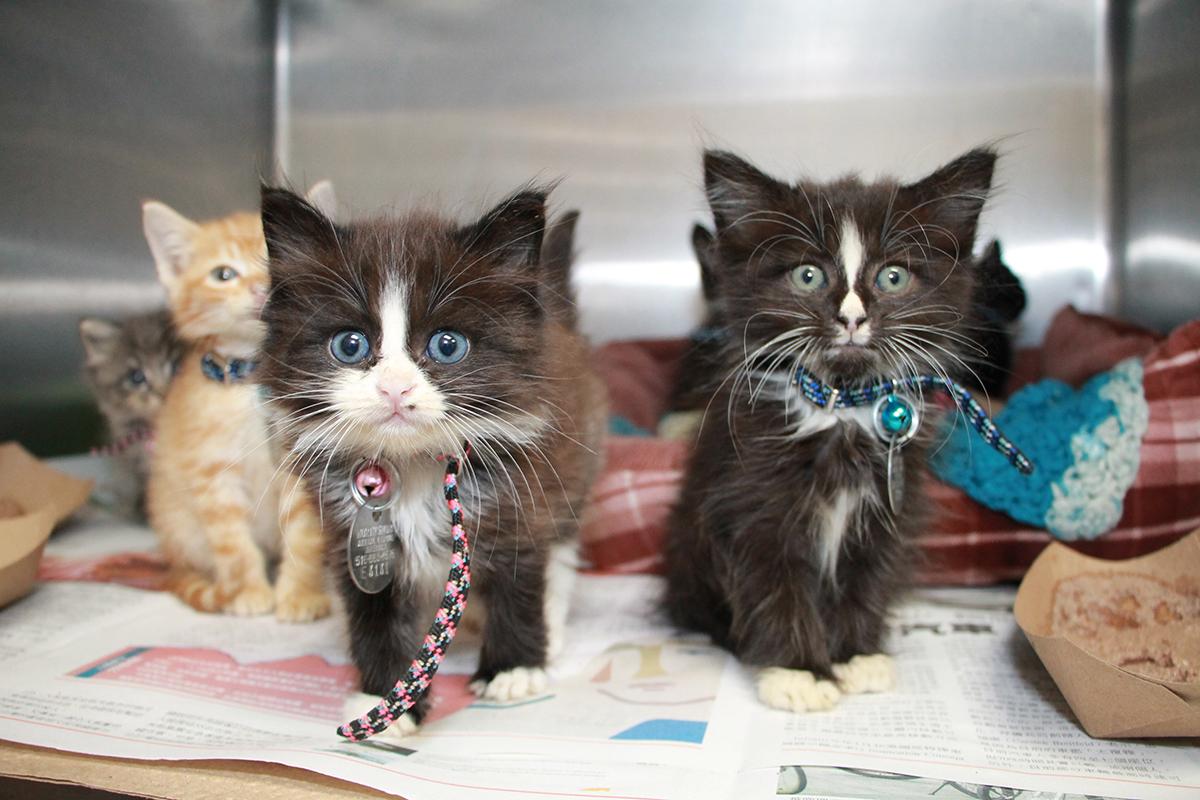 Kitten Season Begins