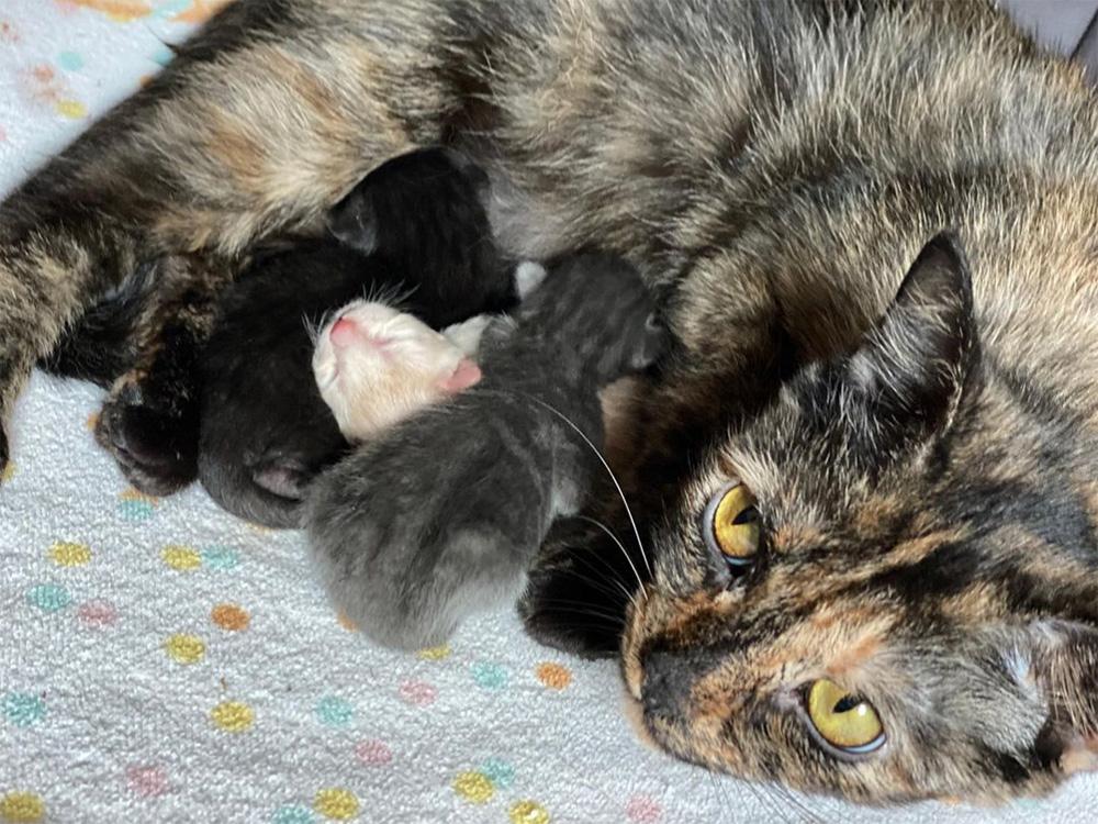 Mama Cherry and her litter