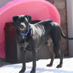 Sponsor Pet Toby